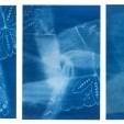 Kara Mia Fenoglietto, Compartmentalized Triptych, Cyanotype, 2020, $100 for all three, 5x7 each, contact: karamiadesign@gmail.com